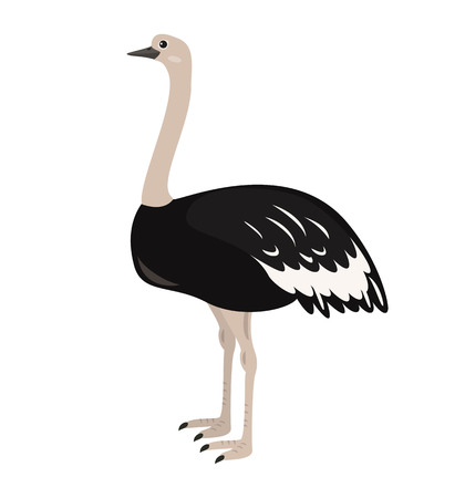 Cartoon ostrich icon on white background. Vector illustration. Illustration