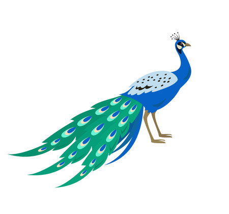 Cartoon peacock icon on white background. Vector illustration.