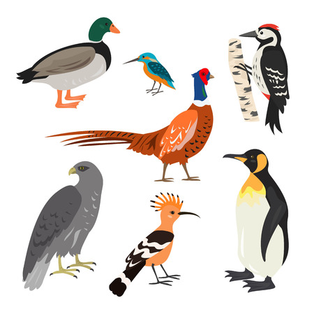 Set of cartoon cute birds on white background. Vector illustration.