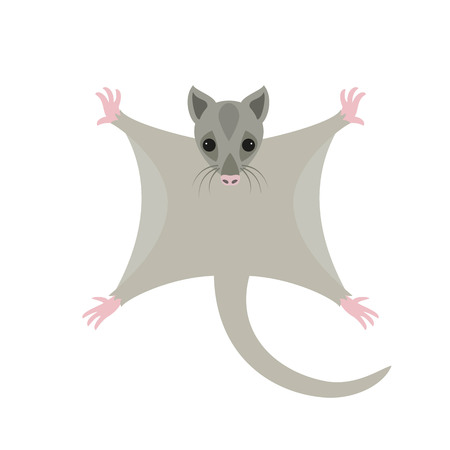 Cute sugar glider on white background. Vector illustration.