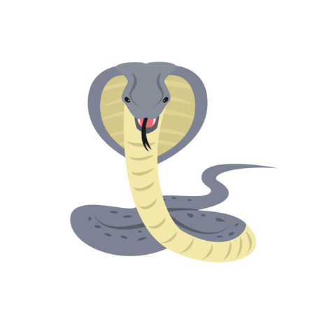 Cobra snake on white background. Vector illustration.