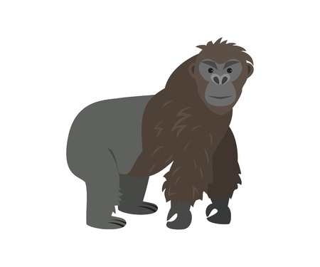 Cute gorilla on white background. Vector illustration.