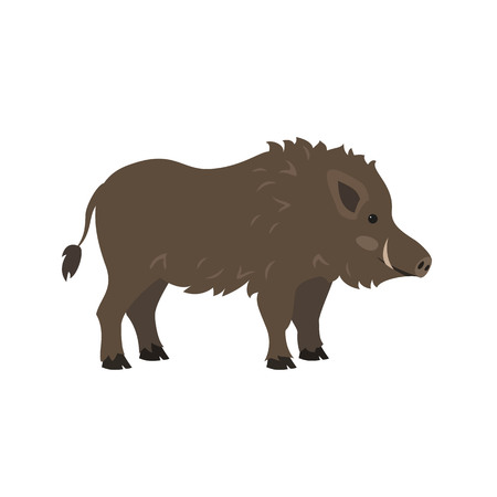 Cute boar on white background. Vector illustration.