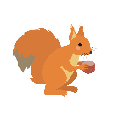 Cute squirrel on white background. Vector illustration.