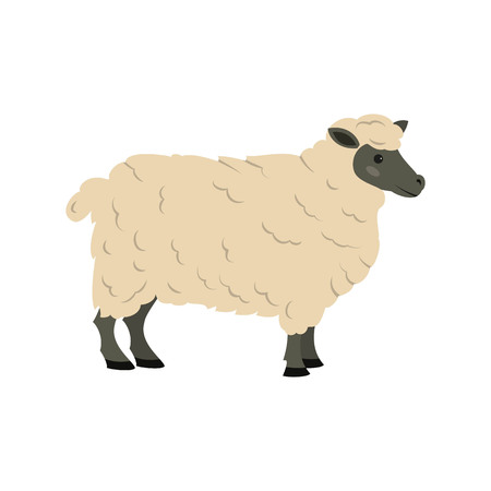 Cute sheep on white background. Vector illustration.