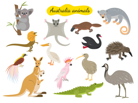 Set of australia animals on white background. Vector illustration. Vectores