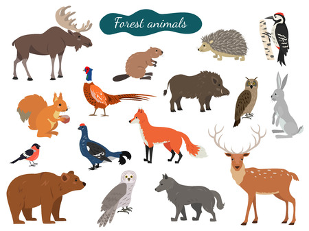 Set of forest animals on white background. Vector illustration. Illustration