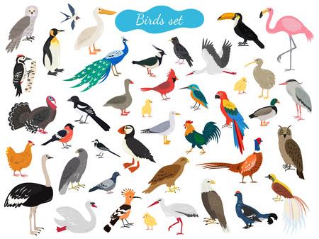 Ensemble d'oiseaux sur fond blanc. Illustration vectorielle. Vecteurs