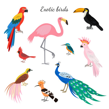 Set of exotic birds on white background. Vector illustration. Vectores