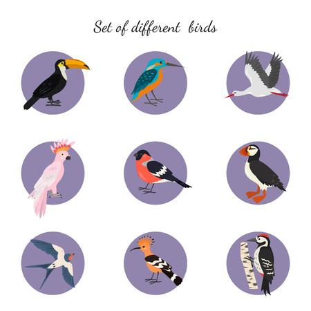 Set of birds on white background. Vector illustration.
