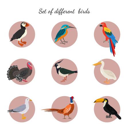 Set of birds on white background. Vector illustration. Banque d'images - 101684687