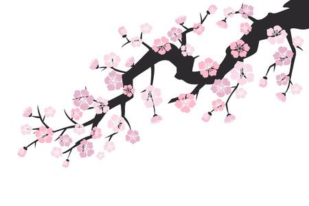 Cherry blossom, sakura flowers on white background. Vector Illustration.