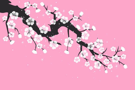 Cherry blossom, sakura flowers on pink background. Vector Illustration. Çizim
