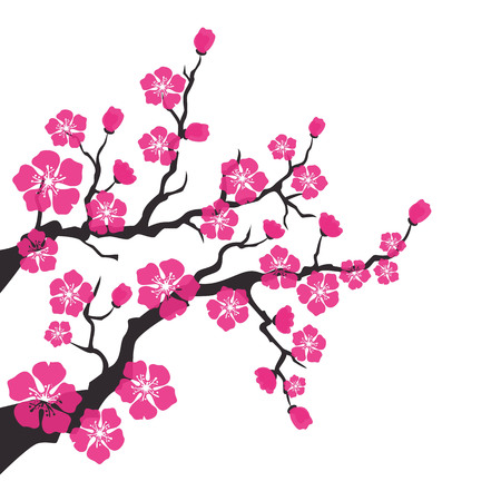Cherry blossom, sakura flowers on white background. Vector Illustration.