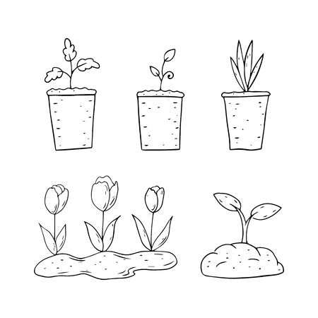 Spring plants in pots on a white background. Vector illustration.