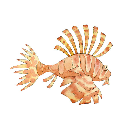 Tropical lionfish on white background. Hand drawn watercolor illustration.