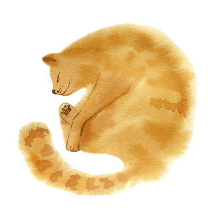 Cute cat on white background. Hand drawn watercolor illustration.