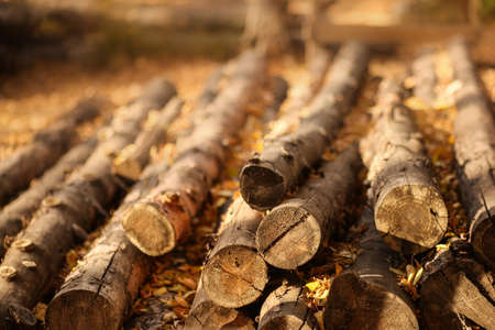 Brown log beam, timber block, stock, baulk lie on the ground Saw in the autumn forest. Sunny landscape. Warm and cozy. Background.