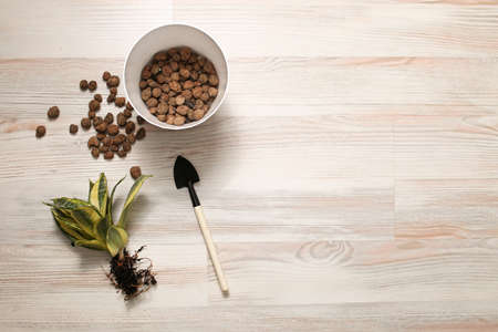 Home plant transplant tools, soil, drainage, shovel rake, pot. Copy space texture screensaver desktop background gardener . Succulent plant, cactus, home tree care. Close-up top view.