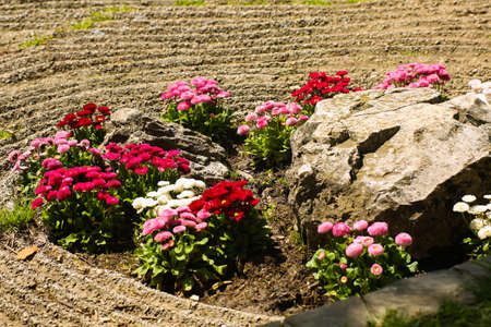 Round flower bed in original design, various colors of bright flowers of white, pink red daisies, petunias. Landscaping of parks, gardens, country villas on the street.