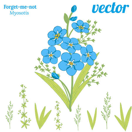 Bouquet of beautiful flowers of forget-me-not. Spring blue flowers Myosotis and green herbs
