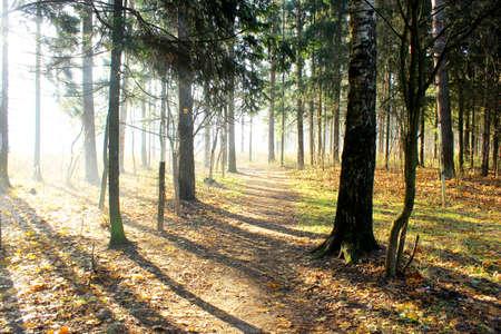 눈부신 숲