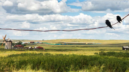 Two swallows are sitting on wires, chatting about love and enjoying a view of the rural landscape