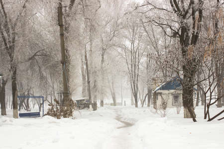 Snow-covered path in the old park, fog in winter. Landscape