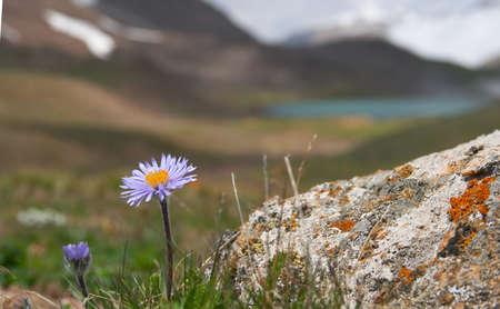 Alpine  meadow in the morning 2 Фото со стока