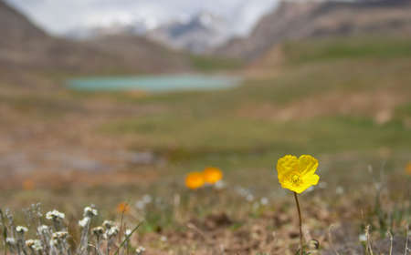 Alpine  meadow in the morning 4