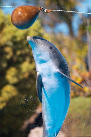 bottlenose: Bottlenose dolphin jump