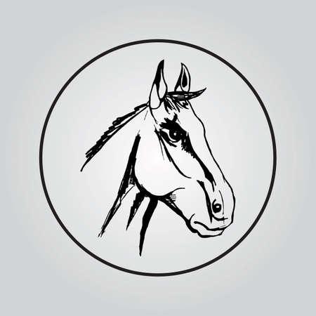 paddock: Vector image of horses head on white background Illustration