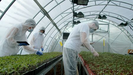 Young farmers checking plants in new greenhouse