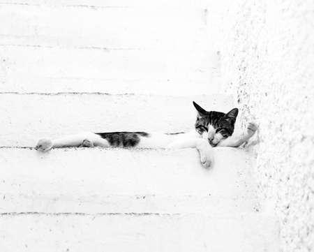 Greek cat on white ladder