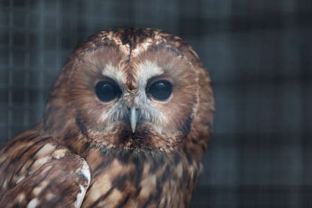 owl in a cage at the zoo Stock Photo