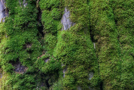 bark of a tree, covered with moss, the rain Stock Photo
