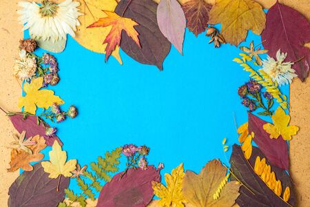 Back to school concept. Autumn frame of dry leaves. Copy space.