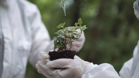 Crop biochemists dropping water or fertilize or preparation on small sample of earth with sprout. Stock Photo