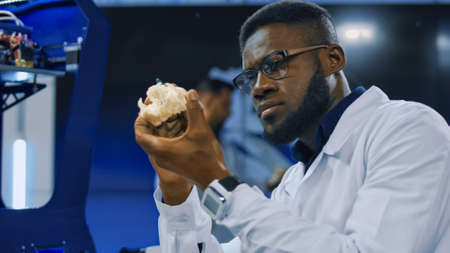 Concentrated african man in white medical gown exploring 3-D printed cranium for future developments in surgery and prosthesis engineering. Stock Photo