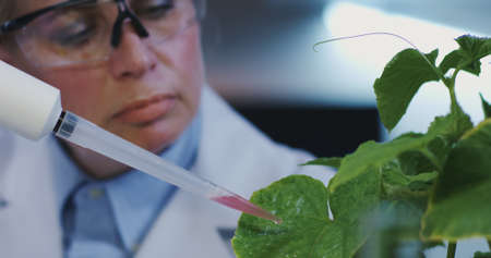 Close-up of a female scientist dropping liquid onto green leaves with a pipette