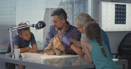 Medium shot of female veterinarian performing ultrasound scan on cat in presence of its masters Stock Photo