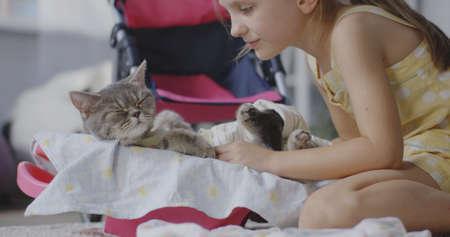 Full shot of a girl pampering a cat Stock fotó