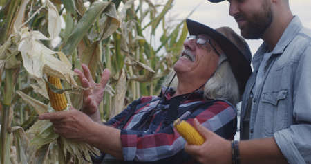 Happy senior man demonstrating ripe corn and sharing experience with young male successor while working in agricultural field together Stock fotó