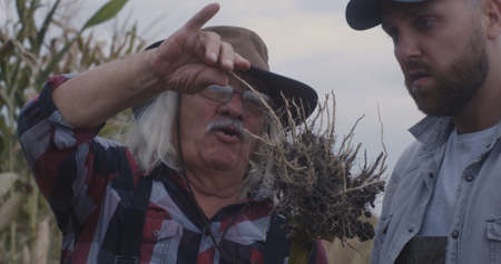 Senior man showing plant roots to grandson and sharing wisdom while working on farm together