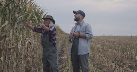 Elderly man giving stick to young successor and showing corn field while walking in countryside together