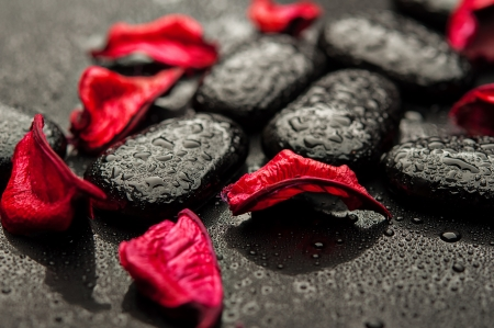 background spa. black stones and red petals with water droplets photo