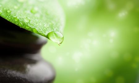 medicina natural: spa verde resumen de antecedentes con ca�da de las hojas y del agua