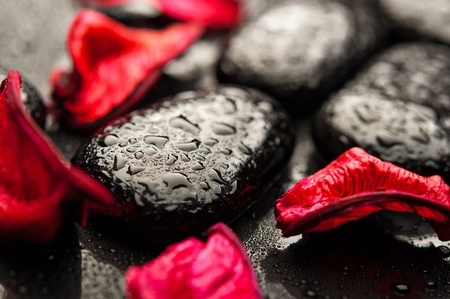 spa rocks: background spa. black stones and red petals with water droplets