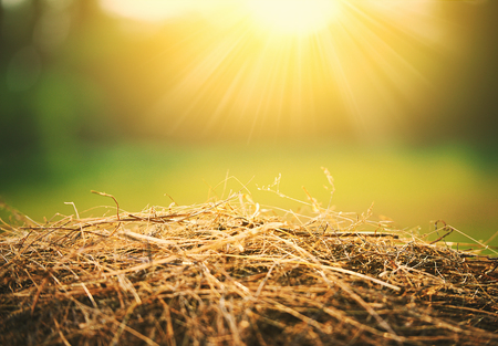 bale: natural summer hay and straw in the sunlight Stock Photo