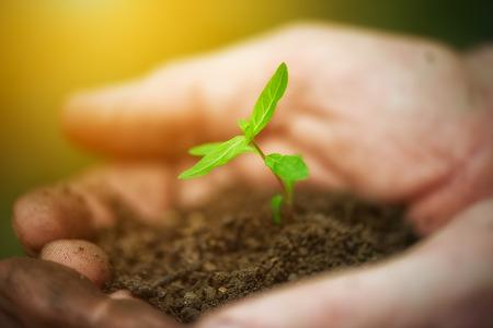 manos sucias: plantas j�venes brotan en las viejas manos sucias, concepto sobre fondo verde Foto de archivo
